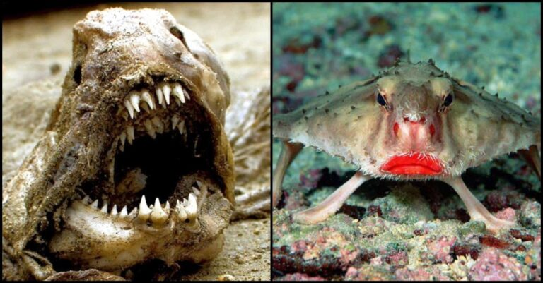 10+ Weird Animals That Will Creep And Freak You Out