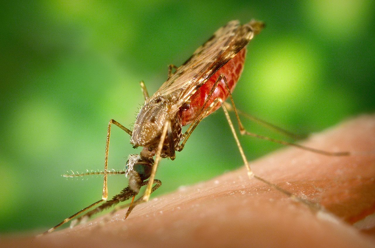 Malaria Gruesome Ancient Methods Of Treatments