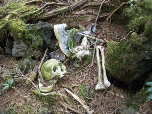 Aokigahara Forest Tourist Attractions