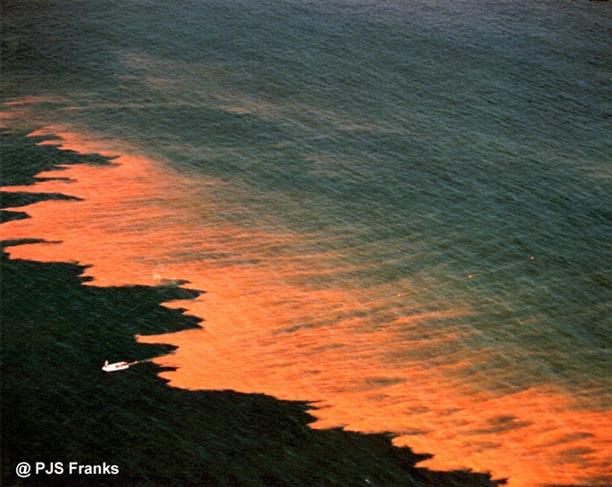 Red Tide Creepy Natural Wonders