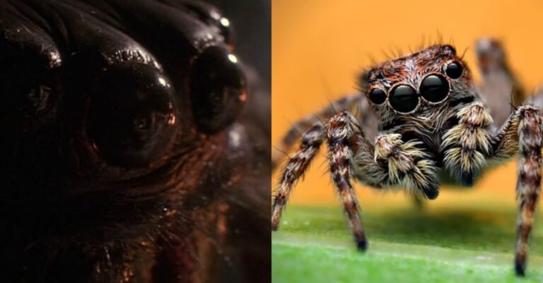 Terrifying Scientific Study Finds Spiders Capable Of Devouring All Human on Earth