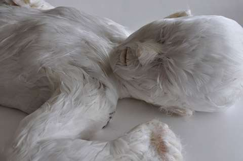 Humanoid Figure COMPLETELY Covered In Fur
