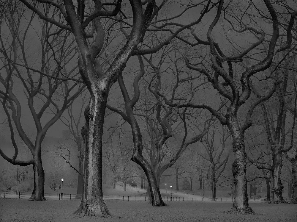 Central Park 13