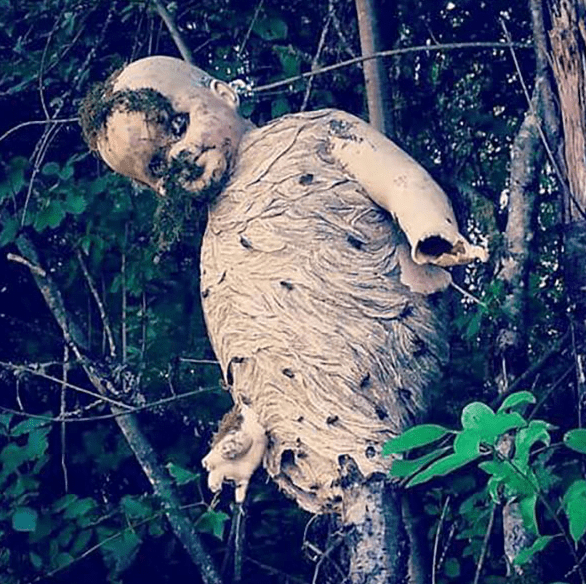 Wasp Nest Around Baby Doll