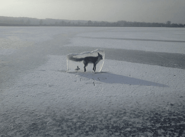 Fox Drowned in Lake, Froze, and Was Out of Ice
