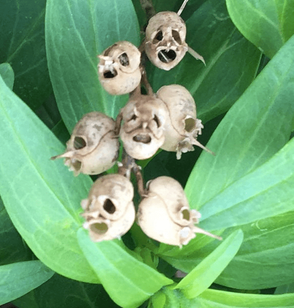 Husks of Dead Flowers