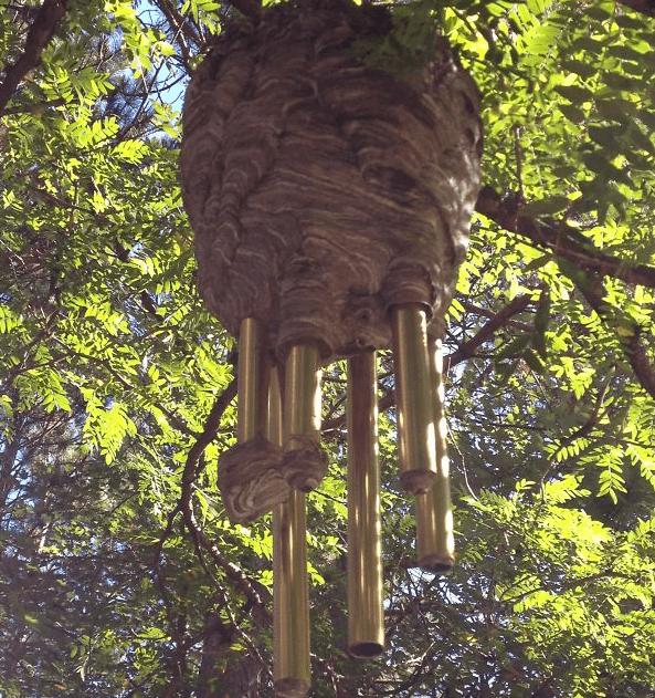 Beehive Around Windchimes