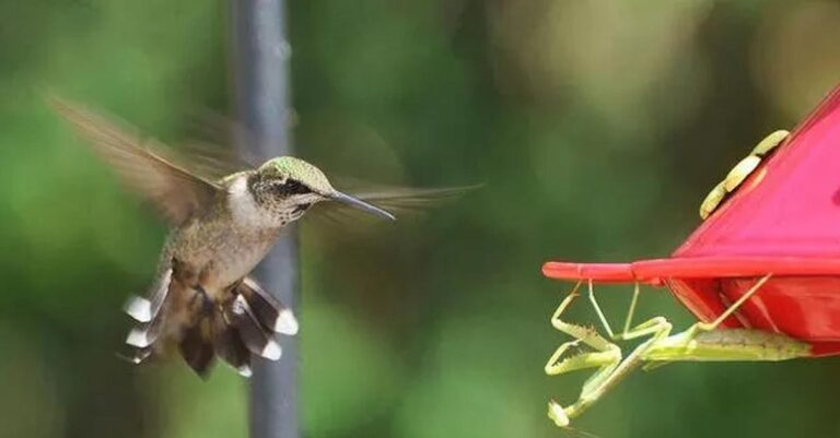 Praying Mantises Have Hit A New Level Of WTF And Are Devouring Bird Brains
