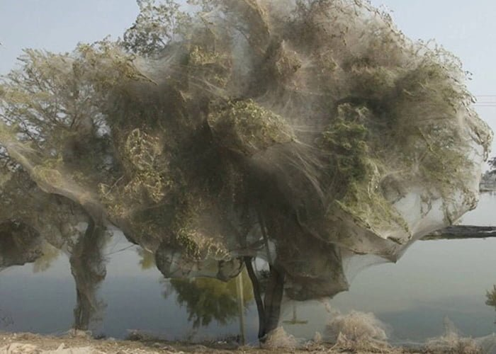The Ghost Trees Of Pakistan