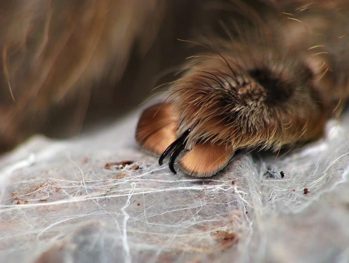 Spiders Tiny Paws 5