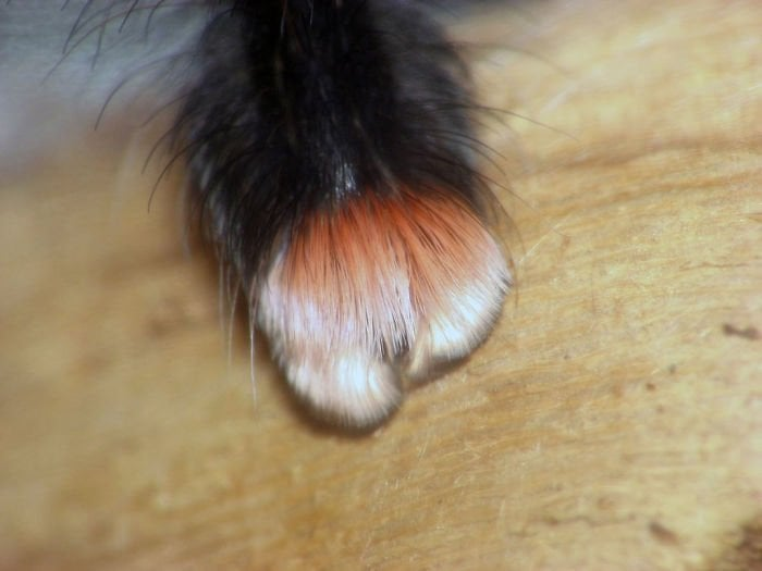 Spiders Tiny Paws 2