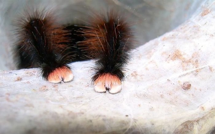 Spiders Tiny Paws