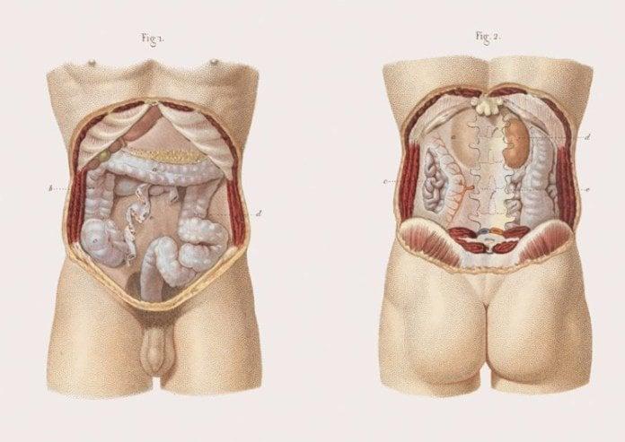 Anatomy of the large intestine