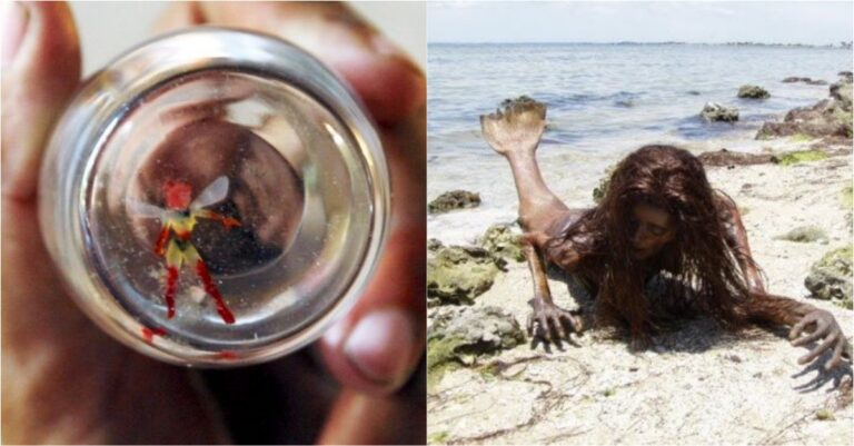 7 Mythical Creatures That Are Totally Real And People Totally Saw Them
