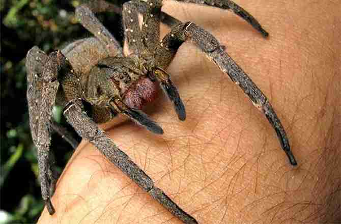 Unmoving spiders might still be alive