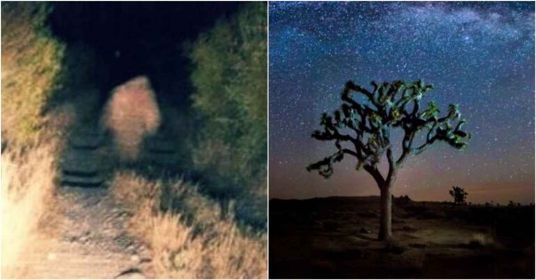 The Mysterious Legend Of The Yucca Man