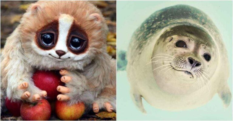 Top 10 Ridiculously Cute But Dangerous Animals That Could Kill You