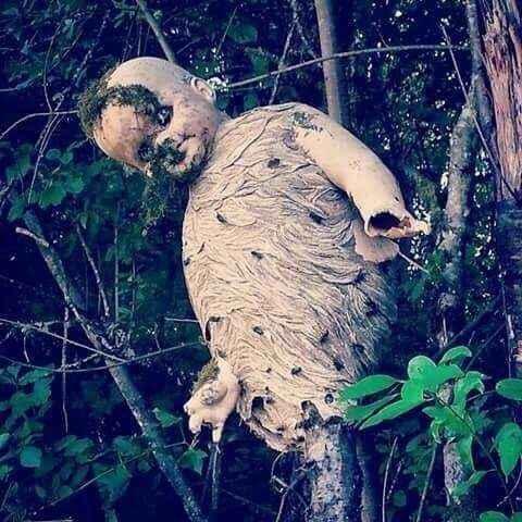 baby-doll-nest