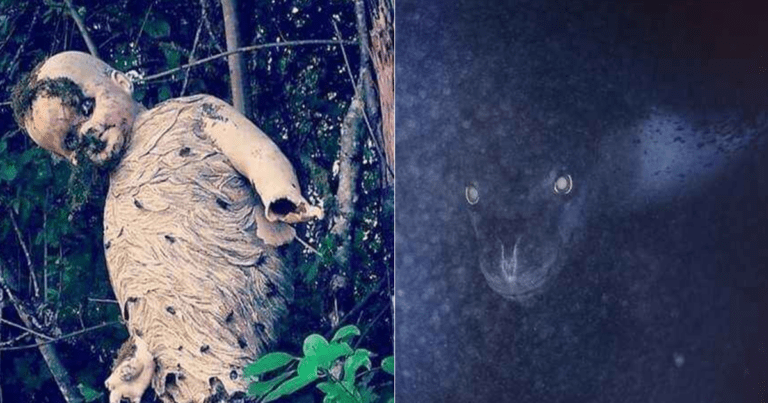 19 Pictures Of Nature That Are Seriously Freaky