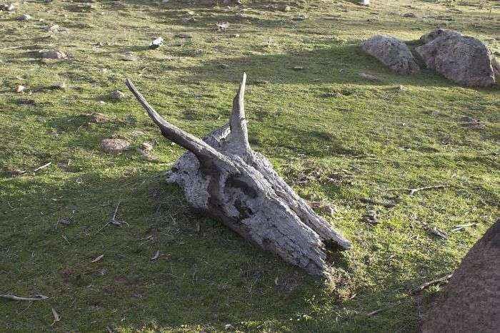 A Dead Dragon