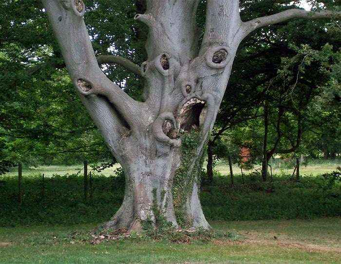 What Has This Tree Seen