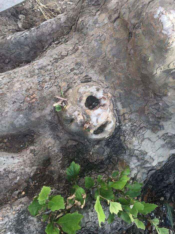 Trees Have Faces Too