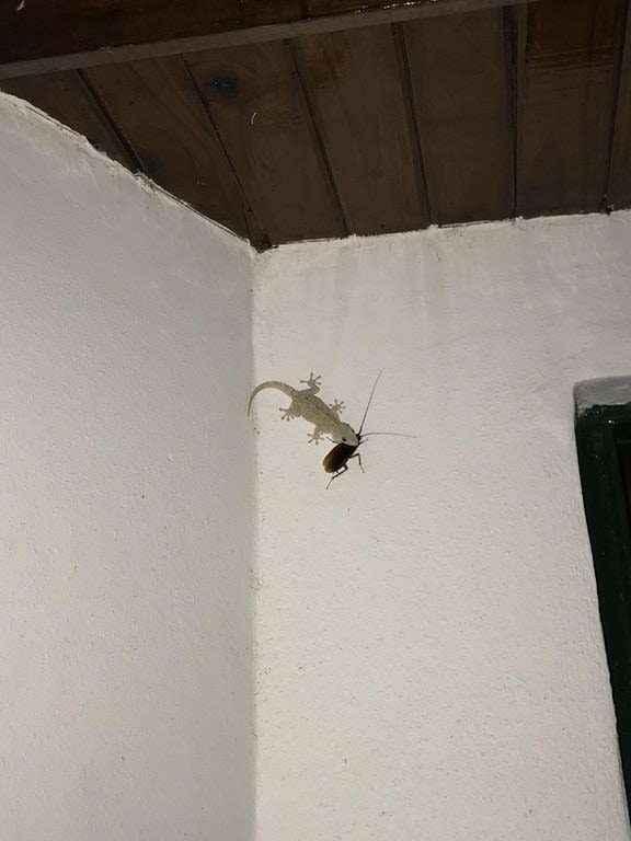 lizard-revenge