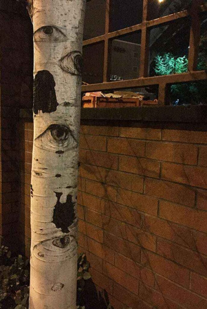 The Tree That Can See
