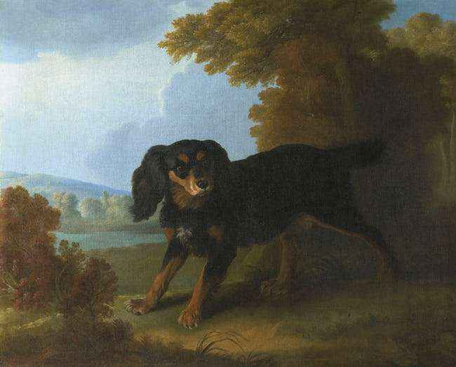 The Black Dog of Connecticut