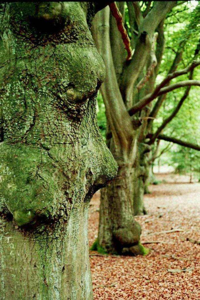 Tree Visage