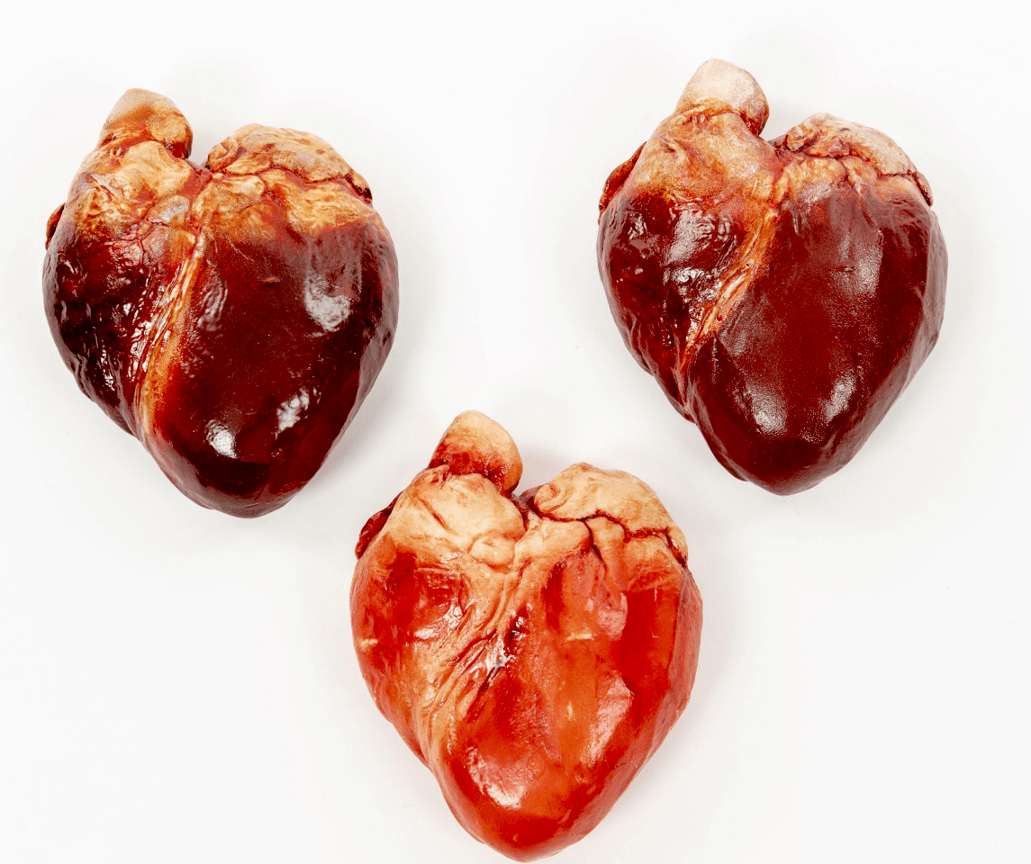Visceral Valentine: You Can Now Send A Replica Human Heart made of Chocolate to Your Loved One.