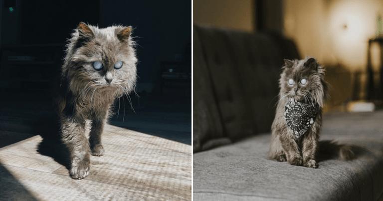 Meet Merlin, The Blind Feline Capturing The Hearts Of Fans Worldwide