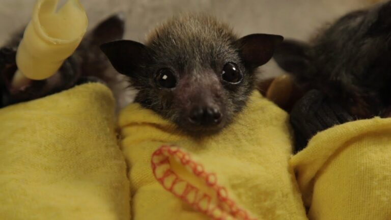 8 Pictures That Prove Bats Are Just Cute Flying Puppies