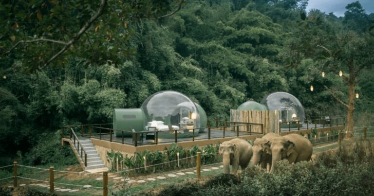 This Thailand Resort Lets You Observe Elephants From A Jungle Bubble