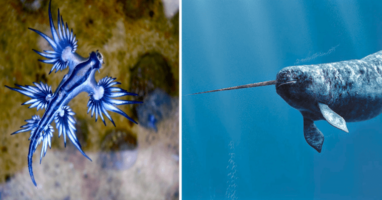 10 Bizarre Animals That You Probably Don't Know Exists