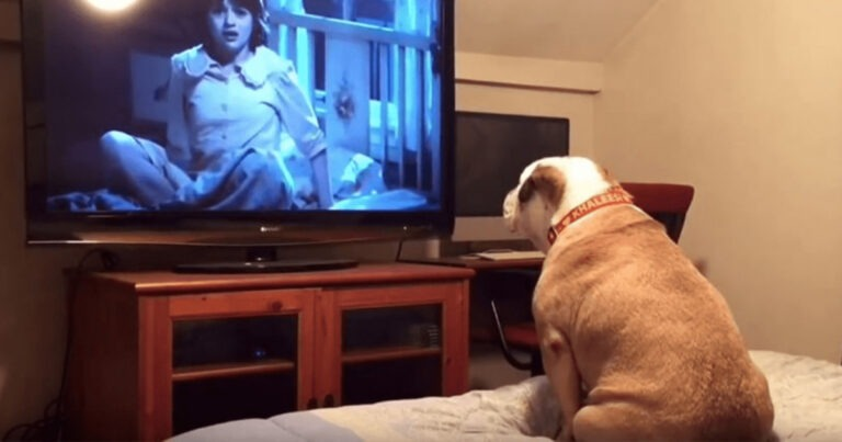 'The Conjuring' Loving Dog Shows that Horror Movies Aren't Just for Humans Anymore