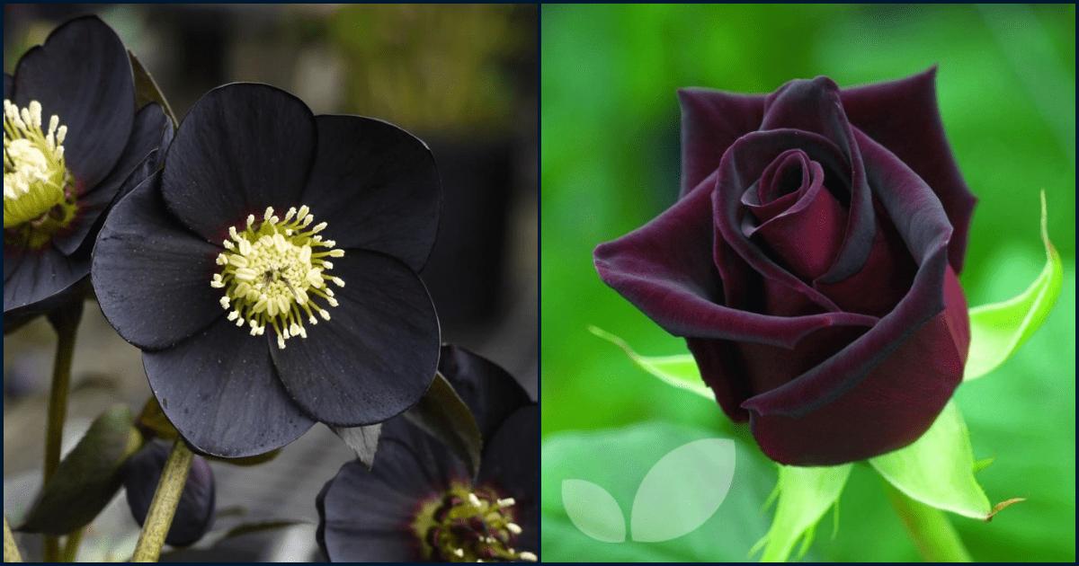 Gothic Garden Flowers