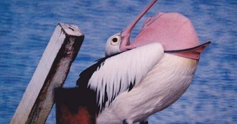 When A Pelican Starts To Overheat, Things Get Horrifying