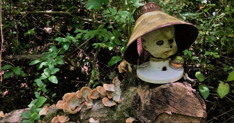 Follow Us On A Hike Through The Dolls Head Trail.