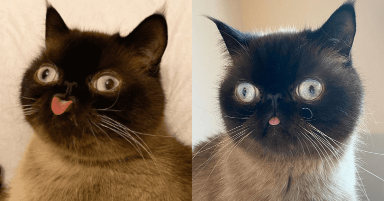 """This feline is capturing the hearts of everyone with his """"blep"""""""