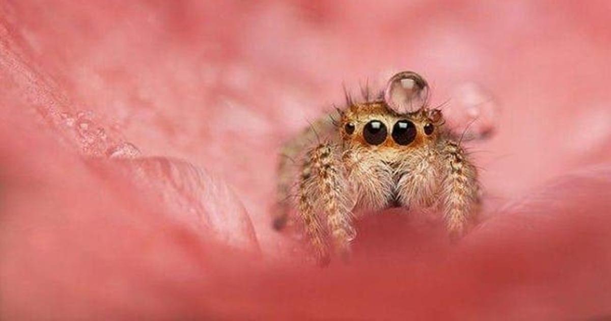 Arachnophobes