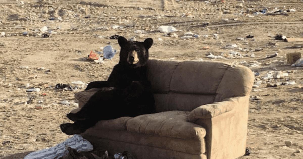 Bear Couch Potato