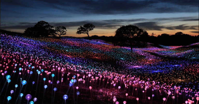 The Field Of Light At Sensorio Will Brighten Up Your Night
