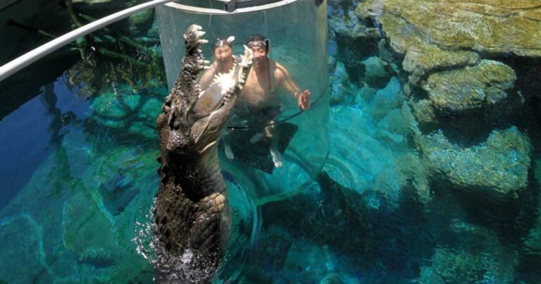 Croccove's Cage Of Death Puts You Face-To-Face With A Saltwater Crocodile