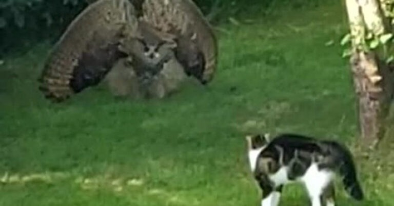 Here's What Happens When An Owl Meets A Cat