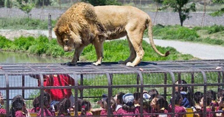 Lehe Ledu Wildlife Zoo Is Popularizing The Reverse Zoo Concept