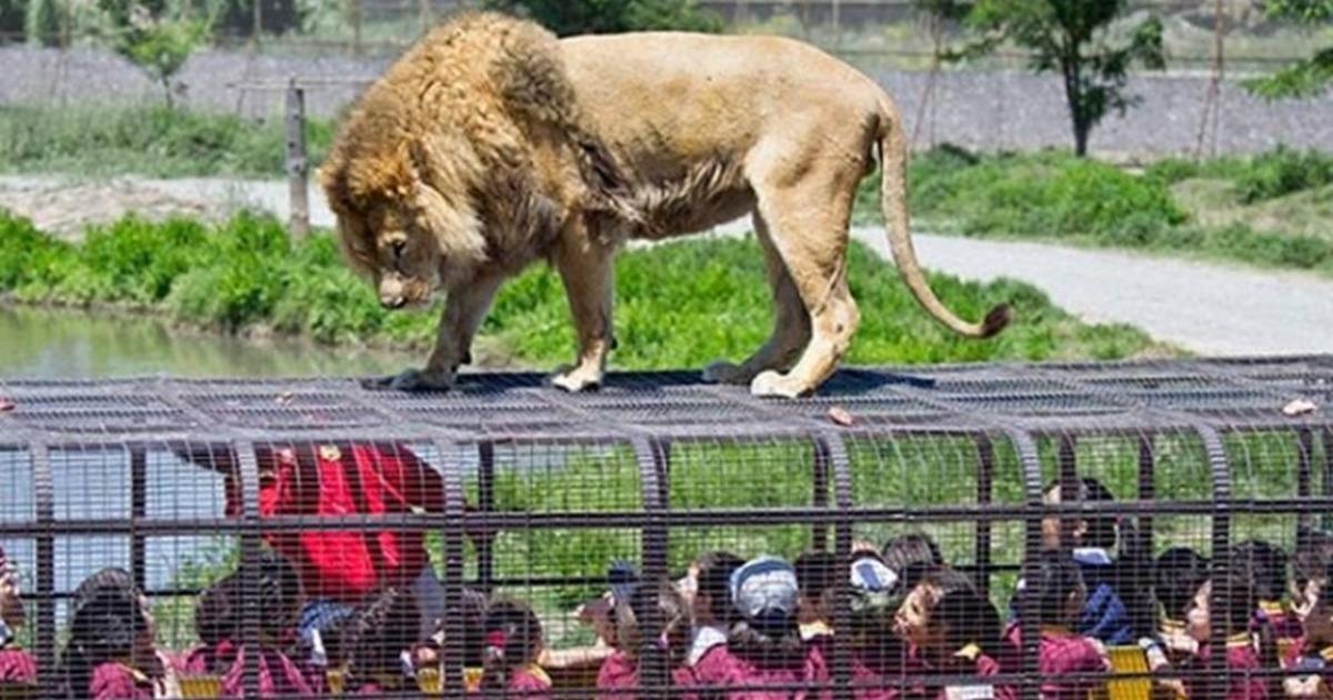 Lehe Ledu Wildlife Zoo Reverse Zoo