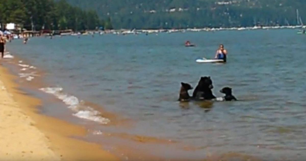 Mother Bear Beach