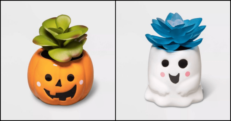 Lighten Up Your Halloween Decor With These Adorable Succulent Planters