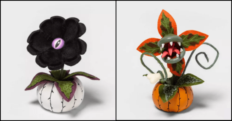Check Out These Hauntingly Adorable Halloween Succulent Planters
